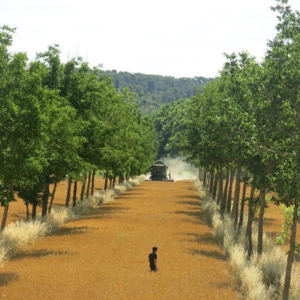 Grandes cultures tracteur homme champ arbres