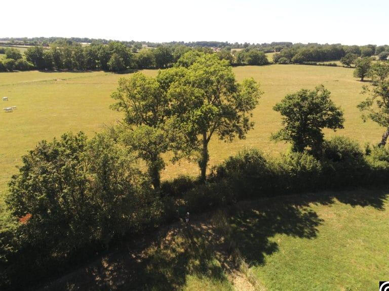 valorisation arbre prairies